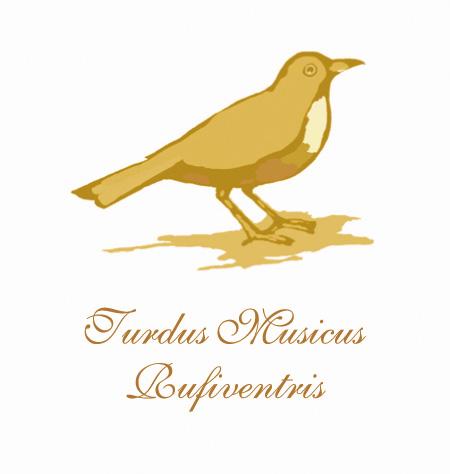 Turdus-Musicus
